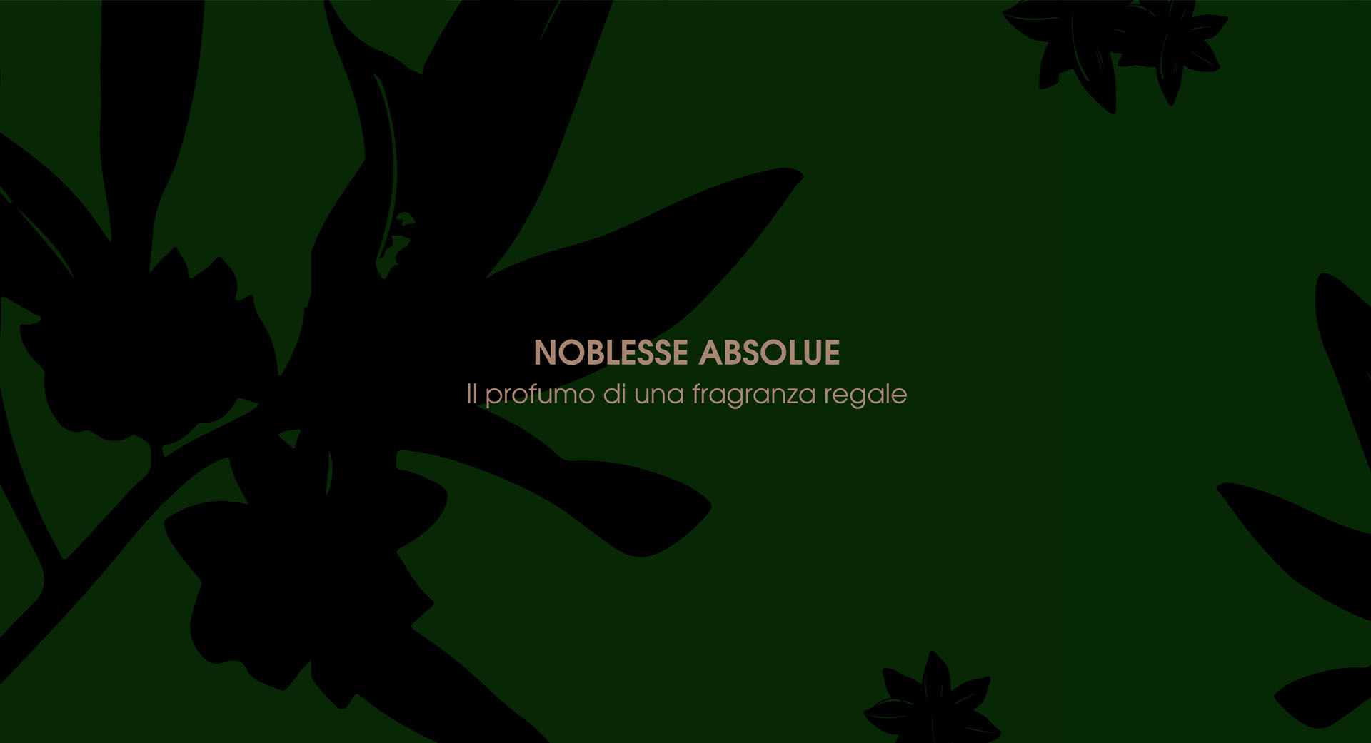 noblesse absolue